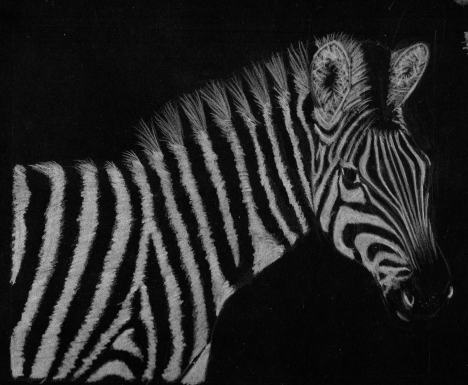 zebra-lapiz-color